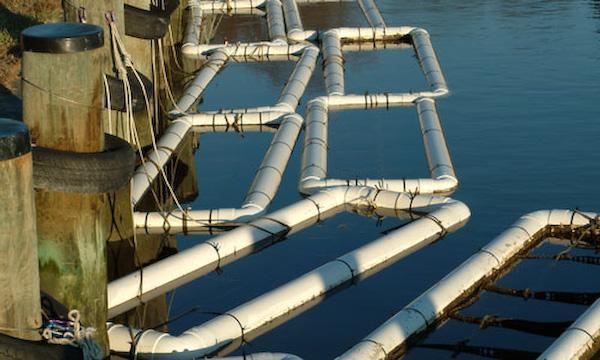 Marine Aquaculture
